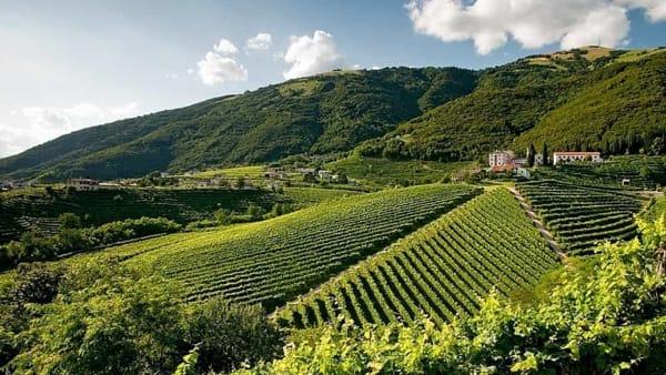 Cassa Rurale Fvg, il convegno sul mondo vitivinicolo e dell'agricoltura a Cervignano