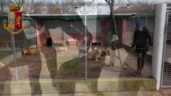 Truffa dei canili, spariti centinaia di migliaia di euro pubblici