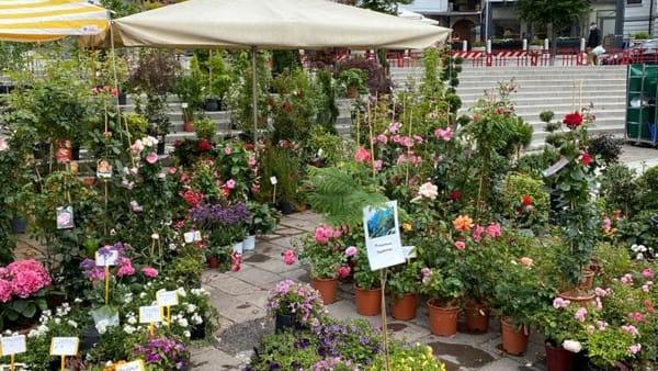 """""""Tarvisio in fiore"""", la mostra mercato primaverile in piazza Unità"""