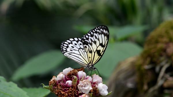 La Casa delle Farfalle di Bordano riapre le sue serre tropicali
