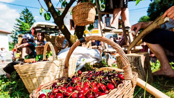 Cantine aperte e 53a tradizionale festa delle ciliegie nella Brda