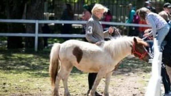 """""""PiknikFest"""": specialità locali e musica dal vivo ammirando i pony e gli stalloni lipizzani"""