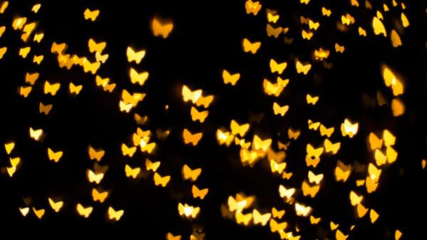"""A Bordano torna la magia della """"Notte delle farfalle"""""""
