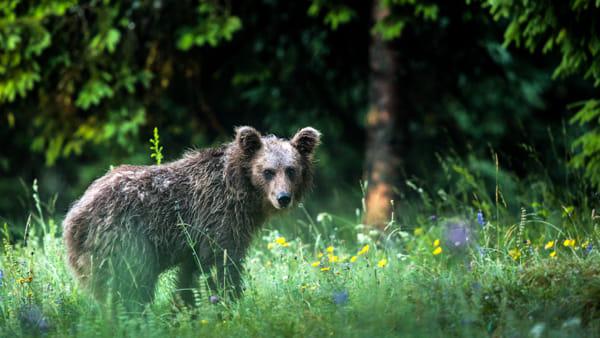 Una serata dedicata alla natura e agli animali selvatici a Cervignano del Friuli