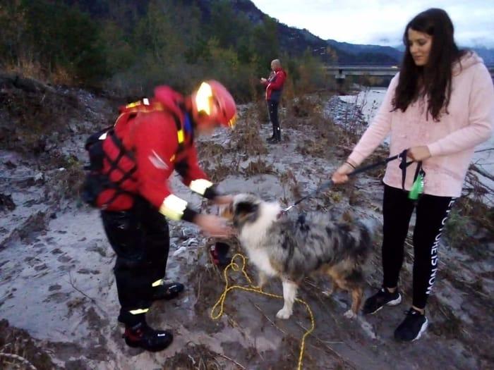Salvato dalle acque del Bût il cane Jack-2