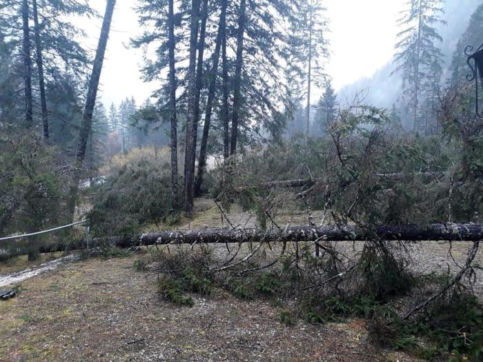 Maltempo: distrutta la foresta dei violini in Val Saisera-4