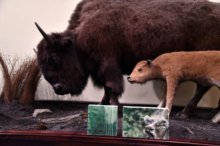 Tiziana Pers-installation view-American buffalos-2